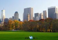美国纽约绵羊草地